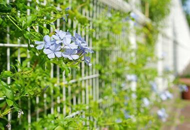 目隠し用緑化フェンス