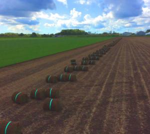芝生ロール回収 恵庭緑化